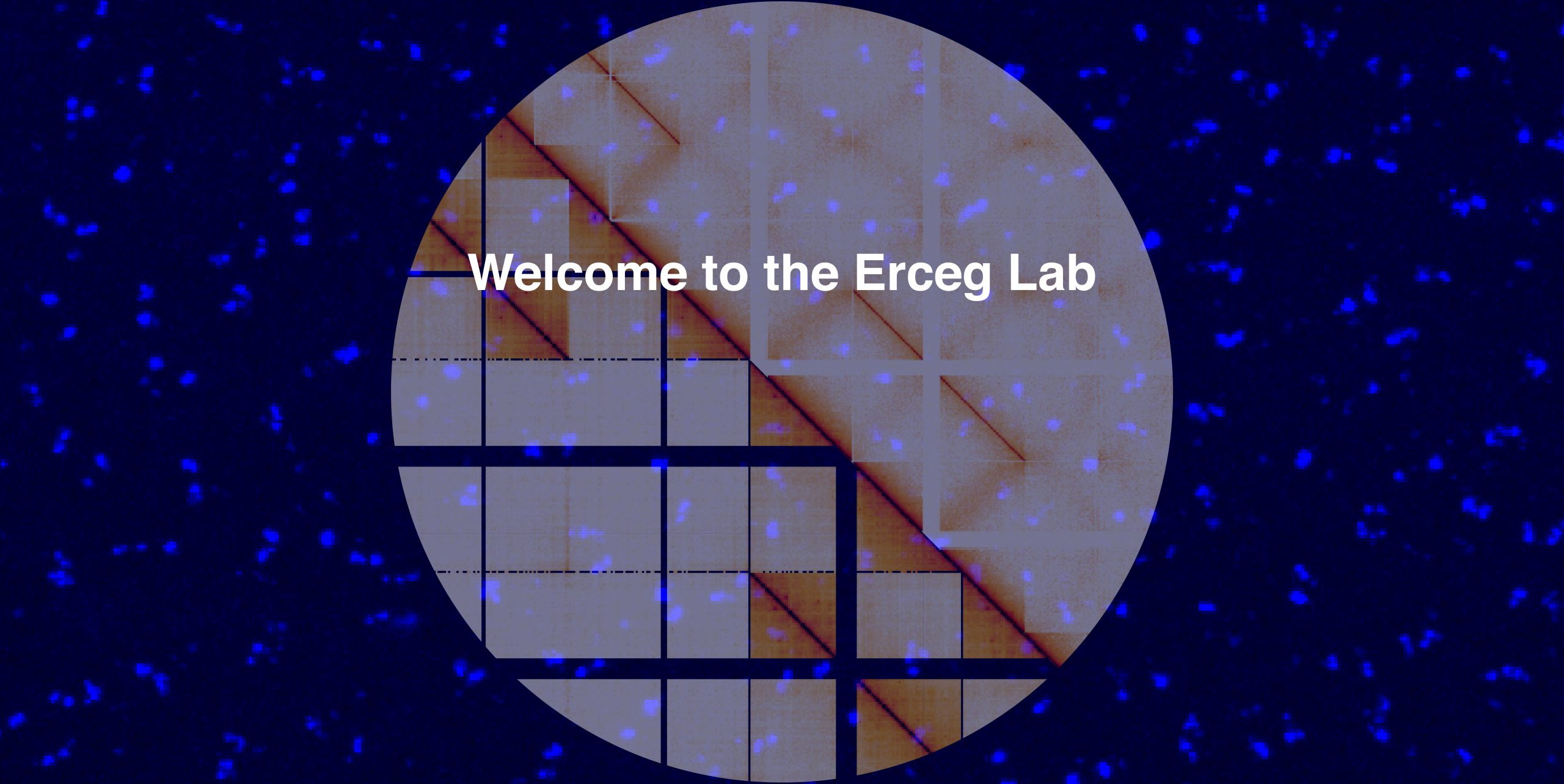 Welcome to the Erceg Lab